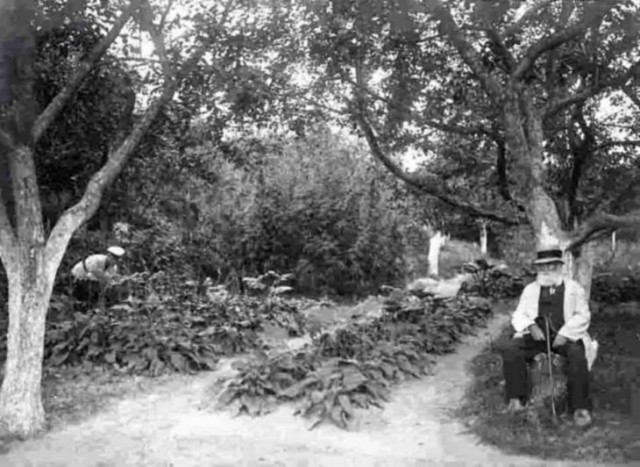 Акліматизаційний сад Миколи Кащенка