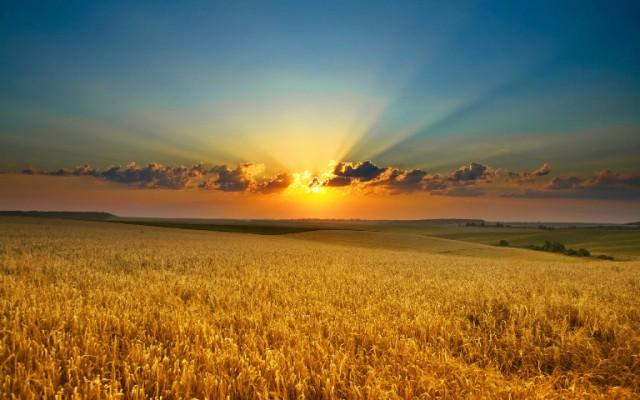 кольори прапору - небо та пшениця